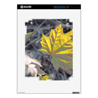 Sunlight on a maple leaf iPad 2 skins