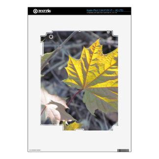 Sunlight on a maple leaf iPad 3 decal
