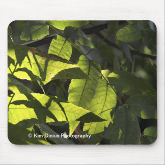 Sunlight on green leaves mouse pad