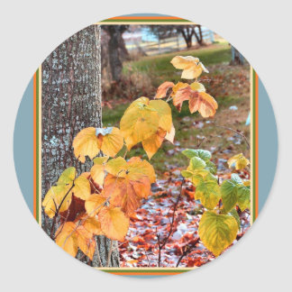 Sunlight on Raspberry Leaves Classic Round Sticker
