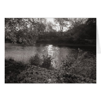 Sunlight on the Taff, Bute Park, Cardiff Greeting Card
