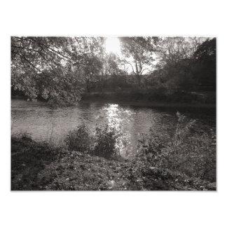Sunlight on the Taff, Bute Park, Cardiff Photo Art