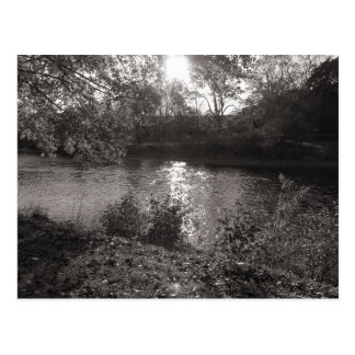 Sunlight on the Taff, Bute Park, Cardiff Postcard