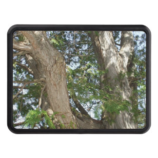 Sunlight on Tree Branches-Earth Day Tow Hitch Cover