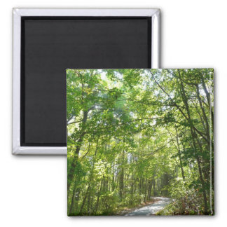 Sunlight on Wooded Path Columbia Maryland Photo 2 Inch Square Magnet