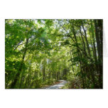 Sunlight on Wooded Path Columbia Maryland Photo Card