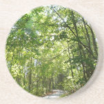 Sunlight on Wooded Path Columbia Maryland Photo Coaster