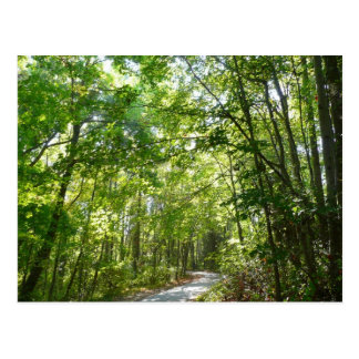 Sunlight on Wooded Path Columbia Maryland Photo Postcard
