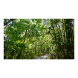 Sunlight on Wooded Path Columbia Maryland Photo Poster