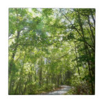 Sunlight on Wooded Path Tile