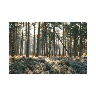 Sunlight shining through forest with frost canvas print