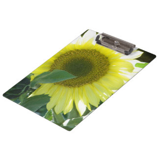 Sunlight Sunflower Clipboard
