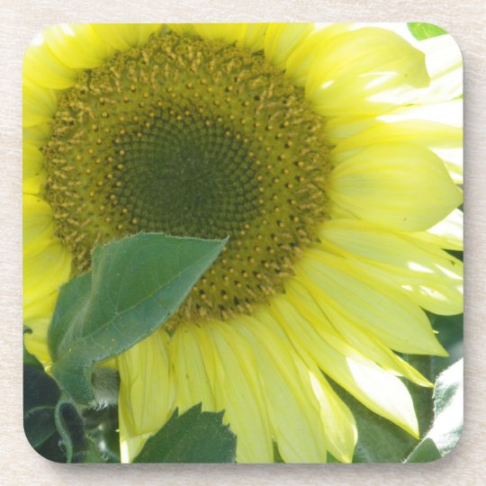 Sunlight Sunflower Drink Coaster