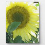 Sunlight Sunflower Photo Plaque