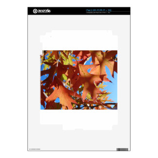 Sunlight Through Autumn Leaves Skins For The iPad 2