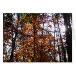 Sunlight through Fall Tree at Greenbelt Park Card