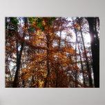 Sunlight through Fall Tree at Greenbelt Park Poster
