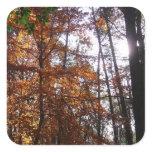 Sunlight through Fall Tree at Greenbelt Park Square Sticker