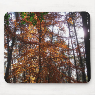 Sunlight Through Fall Trees Late Autumn Landscape Mouse Pad