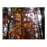Sunlight Through Fall Trees Late Autumn Landscape Postcard