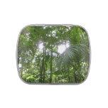 Sunlight Through Rainforest Canopy Candy Tin
