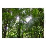 Sunlight Through Rainforest Canopy Tropical Green Card