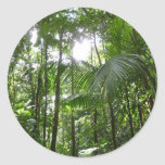 Sunlight Through Rainforest Canopy Tropical Green Classic Round Sticker