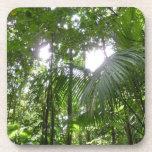 Sunlight Through Rainforest Canopy Tropical Green Coaster