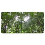 Sunlight Through Rainforest Canopy Tropical Green License Plate