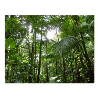 Sunlight Through Rainforest Canopy Tropical Green Postcard