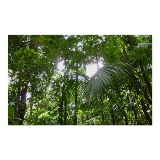 Sunlight Through Rainforest Canopy Tropical Green Poster
