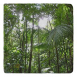 Sunlight Through Rainforest Canopy Tropical Green Trivet