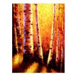 Sunlight Through The Aspens Postcard