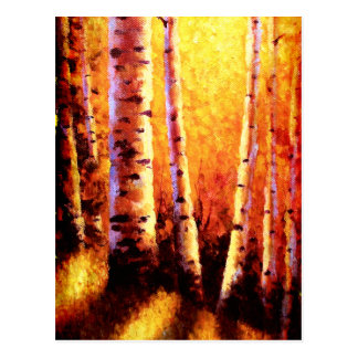 Sunlight Through The Aspens Post Cards