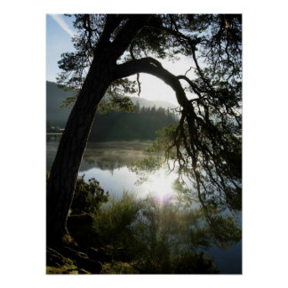 Sunlight through the Pines in Keswick Poster