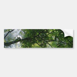 Sunlight Through Trees Car Bumper Sticker