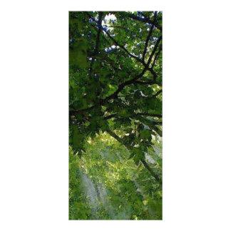 Sunlight Through Trees Custom Rack Card