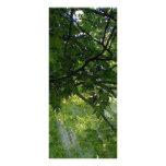 Sunlight Through Trees Customized Rack Card