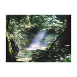 Sunlight Through Trees On Creek Canvas Print