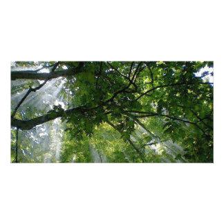 Sunlight Through Trees Photo Card