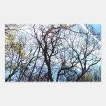 Sunlight Thru The Trees Art Photograph Image Rectangular Stickers