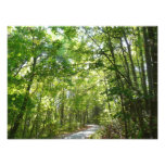 Sunlight Wooded Path Photo Print