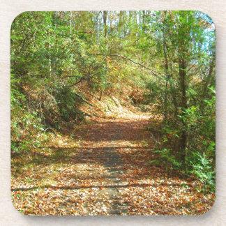Sunlit Autumn Forest Trail Coaster