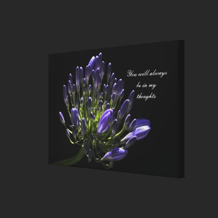Sunlit Blooming Purple Agapanthus, African Lily Gallery Wrap Canvas