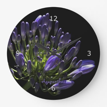 Sunlit Blooming Purple Agapanthus, African Lily Round Clocks