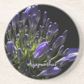 Sunlit Blooming Purple Agapanthus, African Lily Drink Coaster