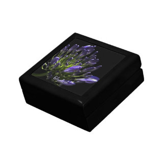 Sunlit Blooming Purple Agapanthus, African Lily Jewelry Box