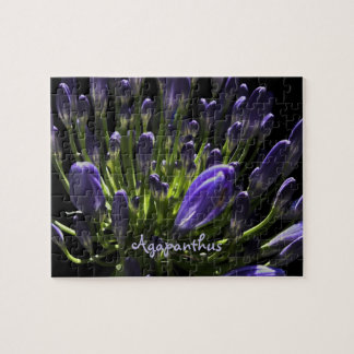 Sunlit Blooming Purple Agapanthus, African Lily Jigsaw Puzzle