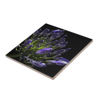 Sunlit Blooming Purple Agapanthus, African Lily Small Square Tile