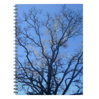 Sunlit Branches Notebook